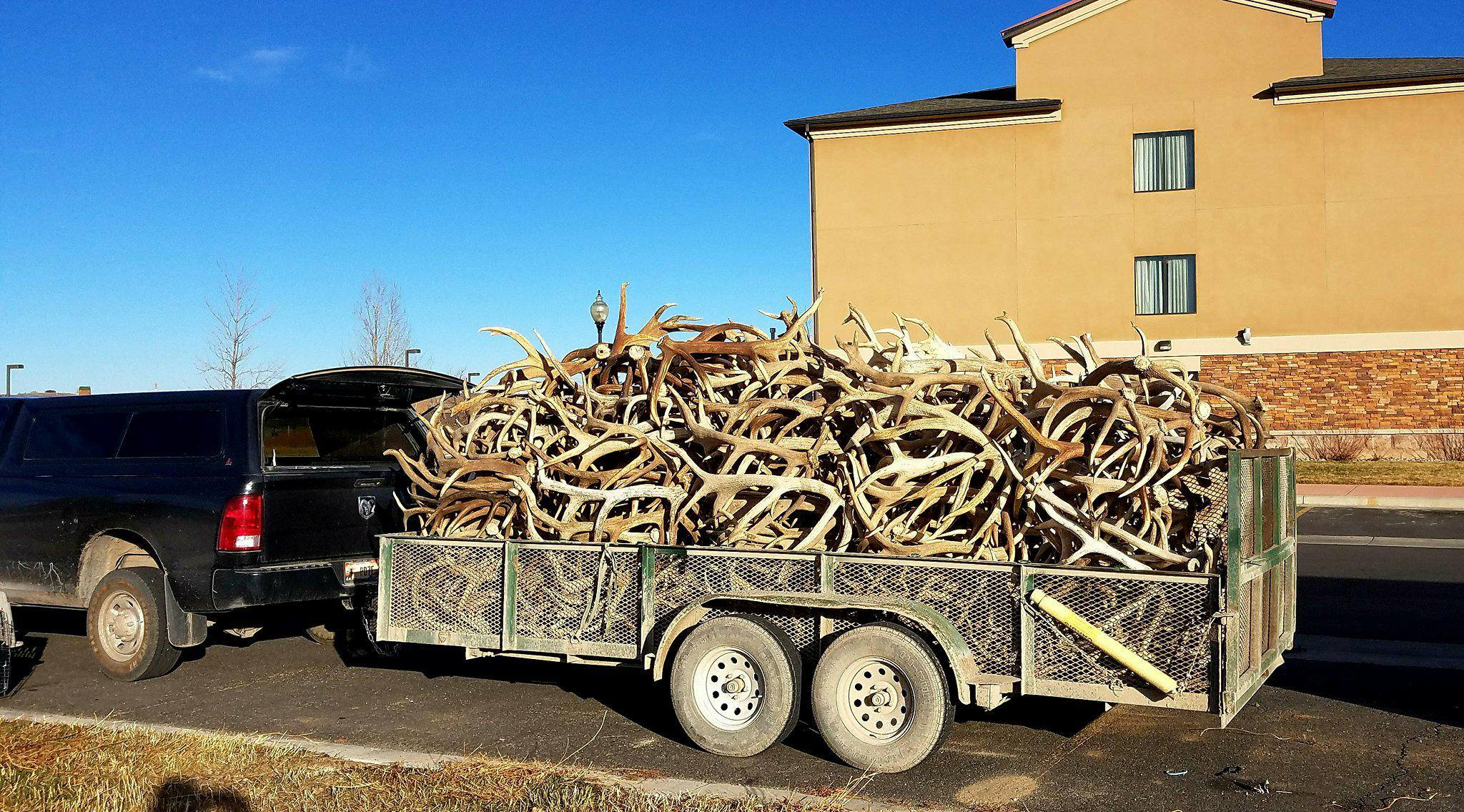 Sell Your Antlers Easily - AntlerBuyers Com